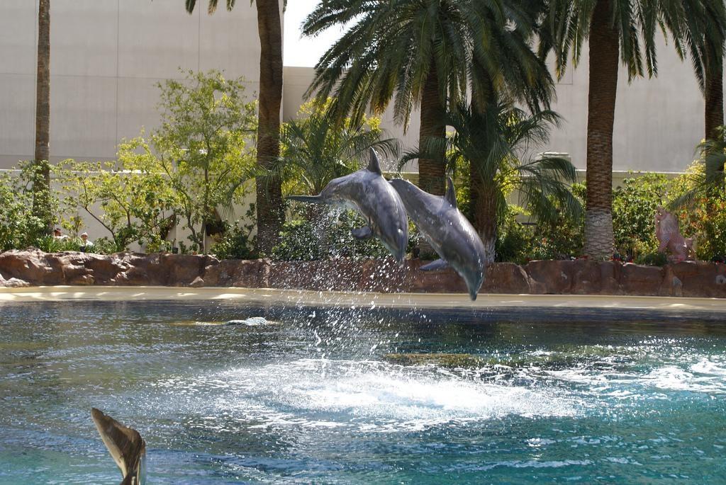 Dolphin-Habitat