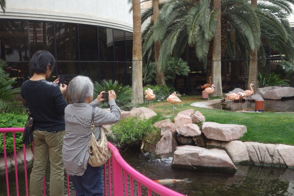 Flamingo-Wildlife-Habitat