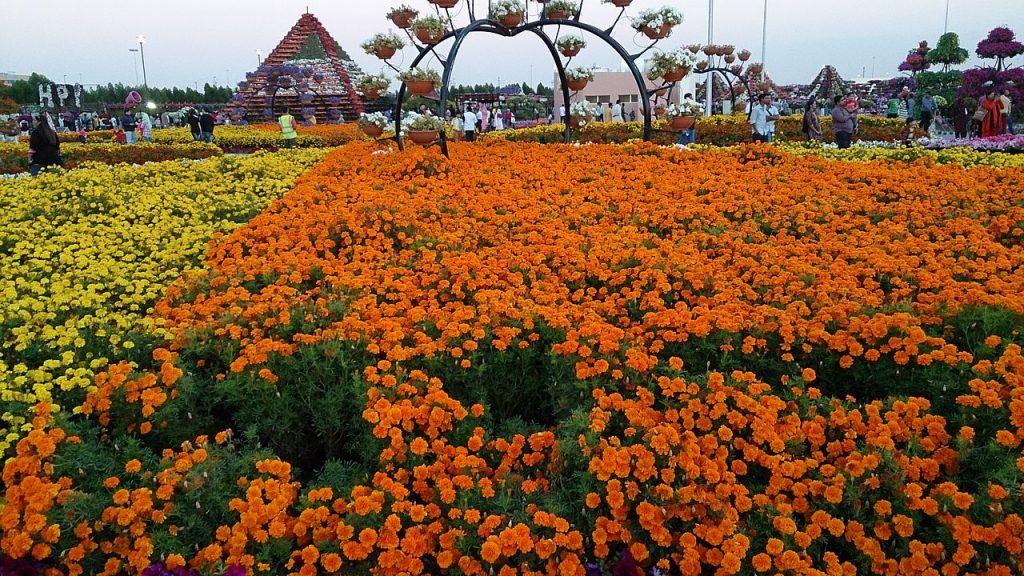 Jardin_de_flores_de_Dubai