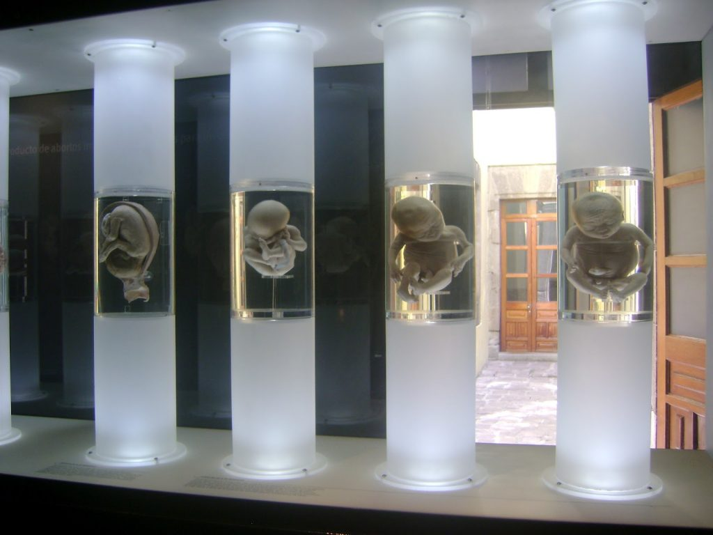 Museo-de-Medicina