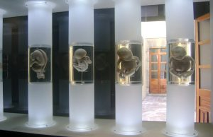 Museos de Ruán