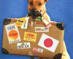 Cómo viajar con mascotas a Italia