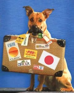 como-viajar-con-mascotas-a-italia