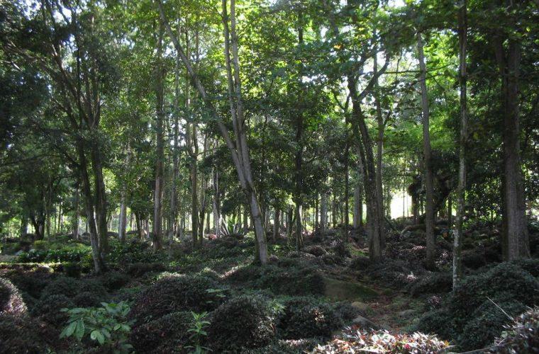 Parque Nacional de Oiti