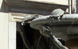 Fuente de las Tortugas 1