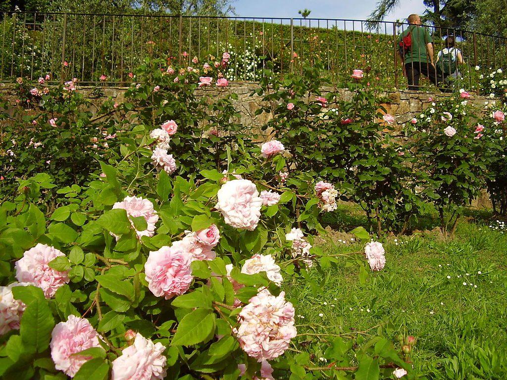 Giardino Delle Rose 2