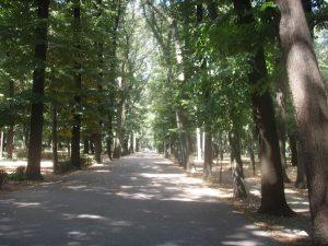 Parco Delle Cascine 1