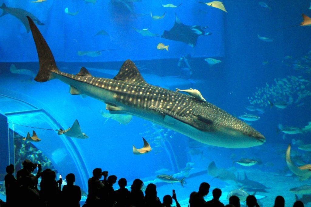London-Aquarium2