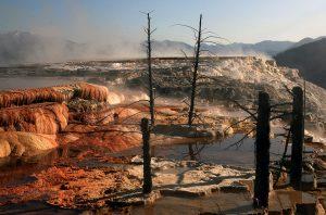 Árboles muertos en el complejo Mammoth Hot Springs, en el Yellowstone.