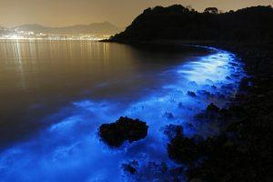Bahia bioluminiscente de fajardo en puerto rico