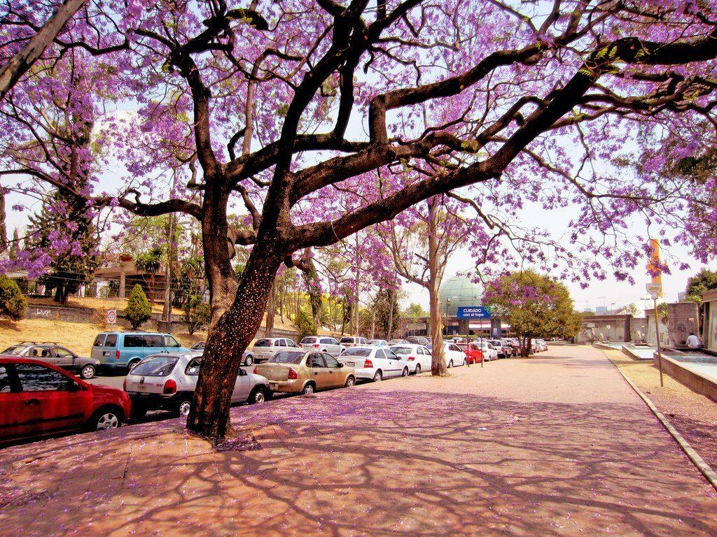 ciudad-de-mexico-en-primavera