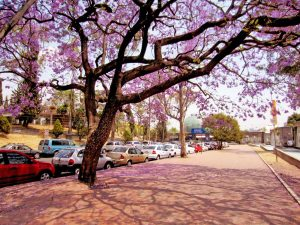 Ciudad de México en primavera.