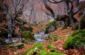 El Faedo de Ciñera (León) en otoño.