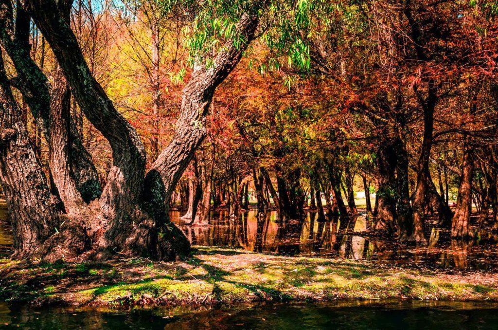 Michoacán en otoño.