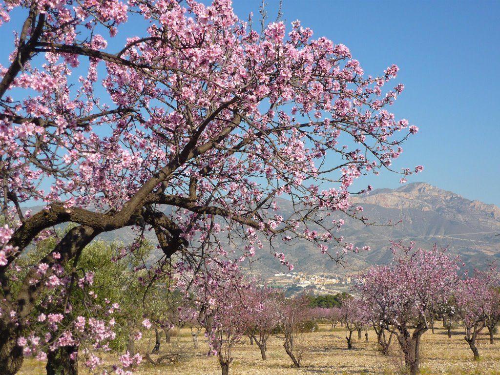 Primavera en España.