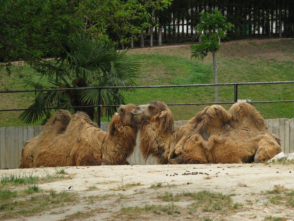 Parque-zoologico-de-Madrid