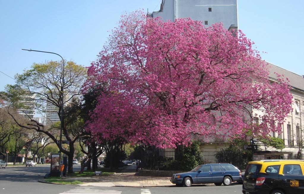 Primavera-en-Buenos-Aires