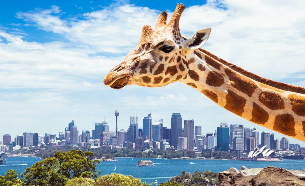 Taronga-Zoo-en-Sidney