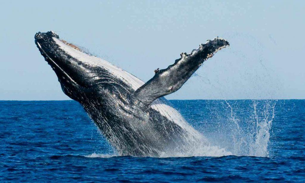 Vista-de-ballenas-en-abril-en-Sidney