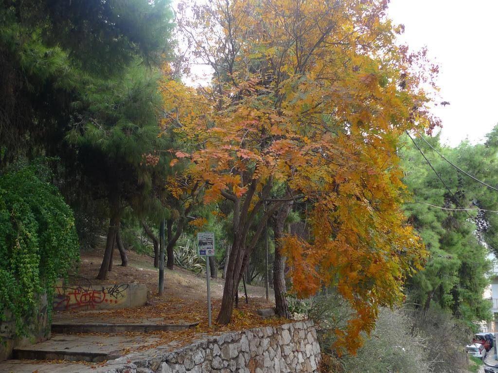 Otono-en-Atenas