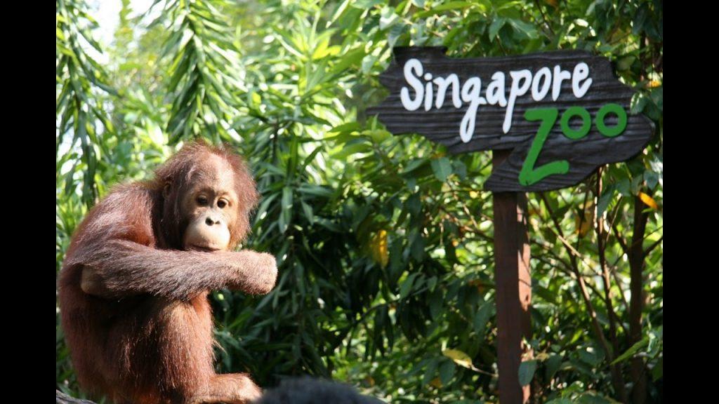 Zoo-de-Singapur